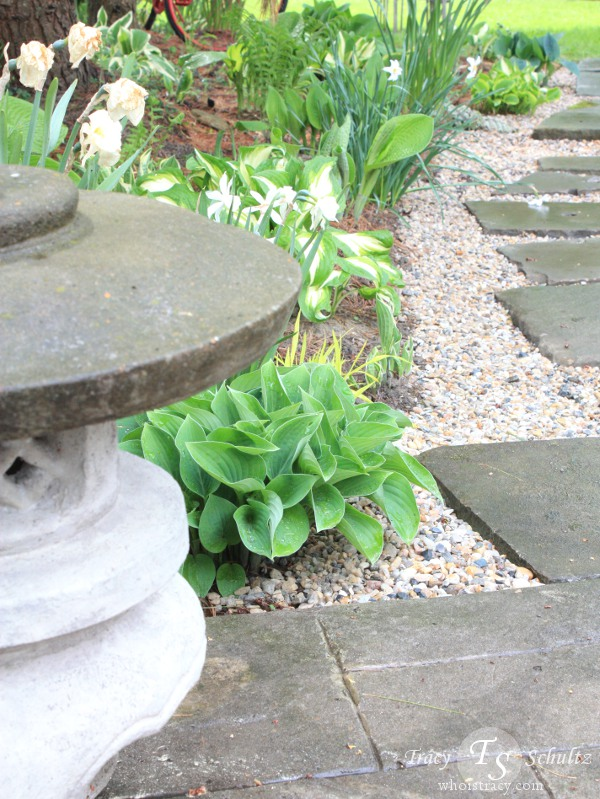 Hosta Garden by Tracy Schultz @whoistracy.com